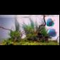 Juwel Colour-Lite T8 fénycső 30 W / 895 mm
